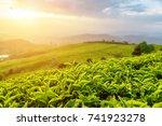 amazing young upper fresh... | Shutterstock . vector #741923278