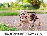 happy cute little dog in... | Shutterstock . vector #741948190