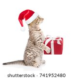 Tabby Cat In Red Christmas Hat...