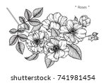 rose flowers drawing with line... | Shutterstock .eps vector #741981454