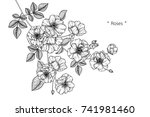 rose flowers drawing with line... | Shutterstock .eps vector #741981460