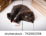 Stock photo small black kitten playing toy on a wooden background black cat toys for kitten 742002358