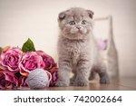 pedigreed cat. cat food...   Shutterstock . vector #742002664