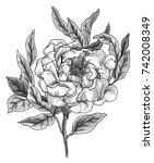 white peony garden flower...   Shutterstock . vector #742008349
