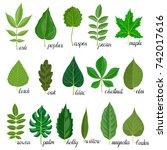 vector green leaves of... | Shutterstock .eps vector #742017616