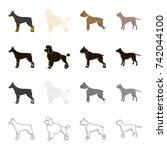 doberman  dog poodle  boxer ... | Shutterstock . vector #742044100