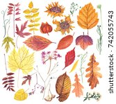 set of dried leaves and flowers ... | Shutterstock . vector #742055743