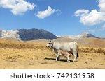 gray cow and calf suckling | Shutterstock . vector #742131958