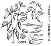 sketch of celery. hand drawn ... | Shutterstock . vector #742154830