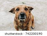 portrait of an adorable mixed... | Shutterstock . vector #742200190