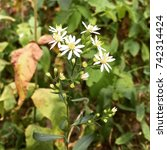 Small photo of Wild Flowers