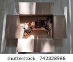cat in a box with sunshine  ... | Shutterstock . vector #742328968