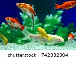 yellow and red goldfish... | Shutterstock . vector #742332304