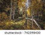 horizontal color image of aspen ... | Shutterstock . vector #742398430