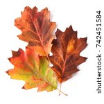 autumn leaf isolated on white... | Shutterstock . vector #742451584