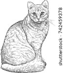 Sketch Of A House Cat