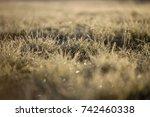 autumn frost on the grass.... | Shutterstock . vector #742460338
