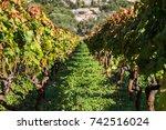 looking along the vineyards of...   Shutterstock . vector #742516024