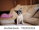 Cheerful Puppy Sitting On The...