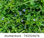 Herbaceous Background Of Meadow ...