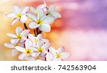 isolated beautiful charming... | Shutterstock . vector #742563904