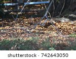 close up of an autumnal path in ... | Shutterstock . vector #742643050