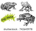 frogs hand drawn sketch... | Shutterstock .eps vector #742645978