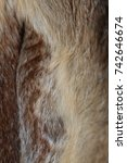 fox fur | Shutterstock . vector #742646674