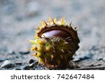 close up of chestnuts in late... | Shutterstock . vector #742647484