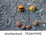 close up of chestnuts in late... | Shutterstock . vector #742647490