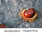 close up of chestnuts in late... | Shutterstock . vector #742647514