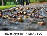 close up of chestnuts in late... | Shutterstock . vector #742647520
