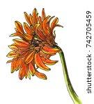 orange gerbera flower blossom.... | Shutterstock . vector #742705459