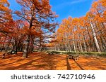 pine trees in autumn   Shutterstock . vector #742710946