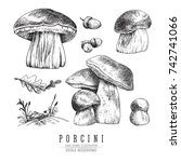 Cep Mushrooms Vector Sketch Se...