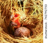 Hungry Baby Bird In A Nest...
