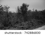 autumn landscapes of the autumn ...   Shutterstock . vector #742886830
