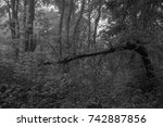 autumn landscapes of the autumn ...   Shutterstock . vector #742887856