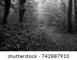 autumn landscapes of the autumn ...   Shutterstock . vector #742887910