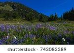Wild flowers in Spray Park, Mount Rainier National Park, Washington - stock photo