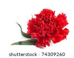One red pink flower. Image isolated over pure white background - stock photo