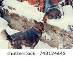 Stock photo big dog playing with cat outdoor in the snow in winter 743124643