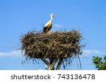 stork  stork nest and storks in ... | Shutterstock . vector #743136478