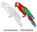 ara parrot cartoon  page for... | Shutterstock .eps vector #743166334