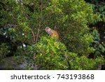 Image Of Squirrel Monkey  ...