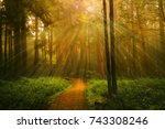 light ray and trees at the... | Shutterstock . vector #743308246