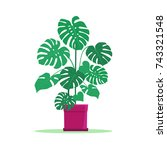 houseplant in pot isolated.... | Shutterstock .eps vector #743321548