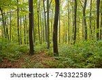 a beech forest in the vienna... | Shutterstock . vector #743322589