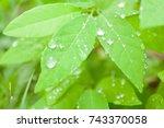 dew drop and green leaf... | Shutterstock . vector #743370058