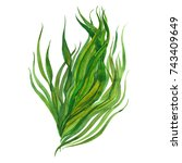 Watercolor Seaweed  Watercolor...